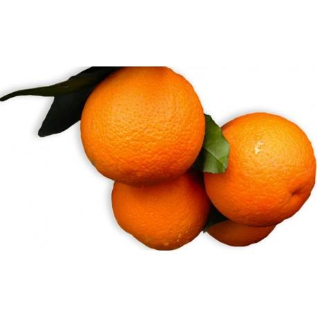 Arance Biologiche - Varietà Vaniglia